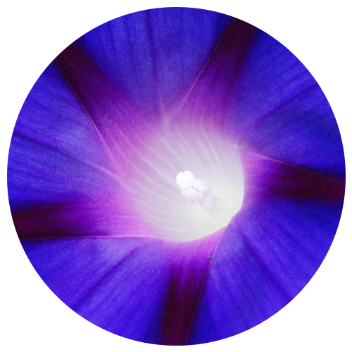 Meditationen | transpersonale Psychologie